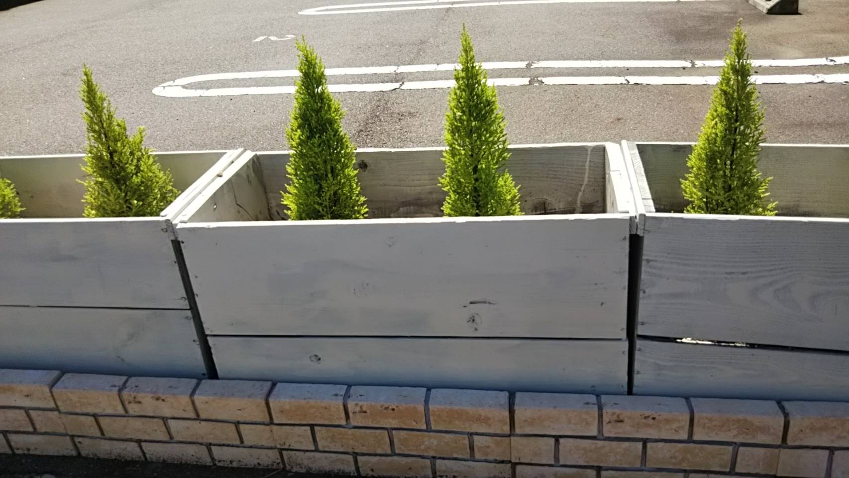 プランター植栽